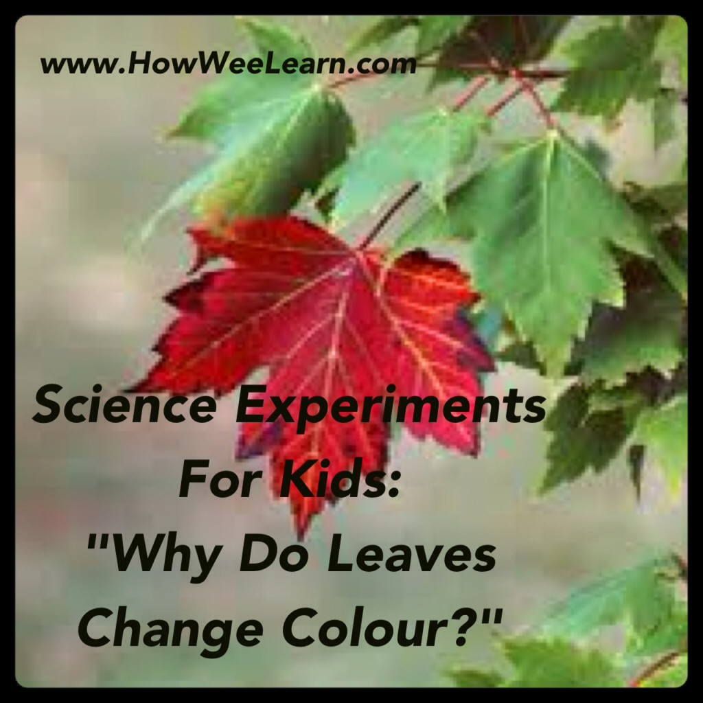 why do leaves change color in fall science experiment