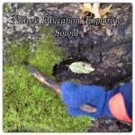Nature Education: Exploring Sound (Part 1 of the 5 Senses)