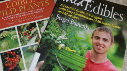 Exploring the sense of taste in nature with wild edible plants