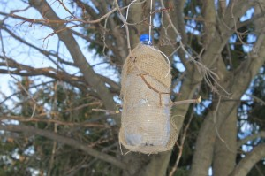how to make a birdfeeder with kids