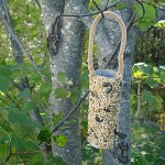 homemade bird feeders for kids to make
