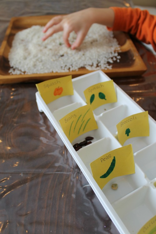 exploring and learning about seeds for kids