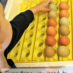 How to Incubate Chicken Eggs with Kids!