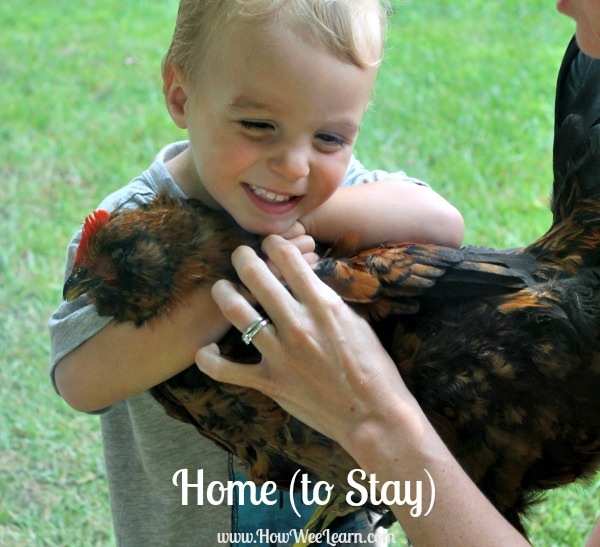 how to hatch chickens with kids