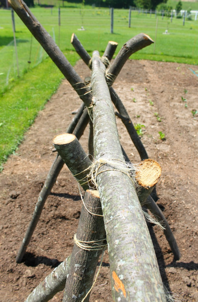 ideas for building a snap pea trellis
