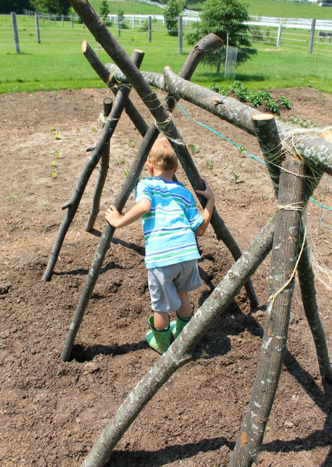 How to build a pea trellis fort
