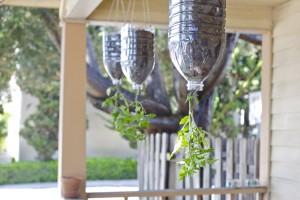 Fun garden ideas - inverted tomato plants