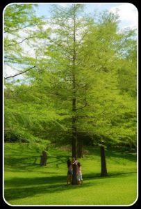 Forest Kindergarten - tree classification
