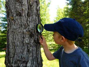 Forest kindergarten - B is for Bark