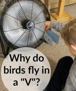 "Why do birds fly in a ""V""?"