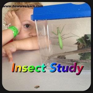 Science Experiment: Insect Study
