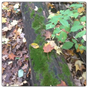 language development activities in nature