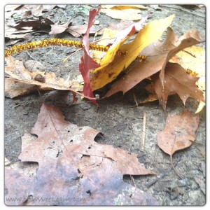 learning to sew with leaves