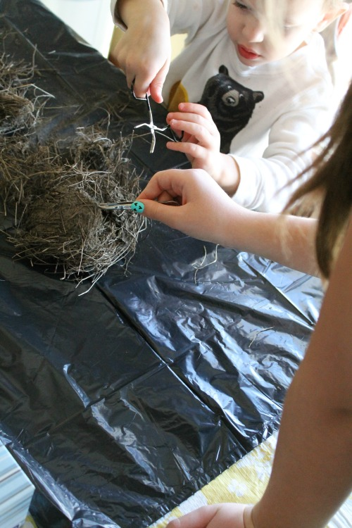 how we learn dissecting a birds nest
