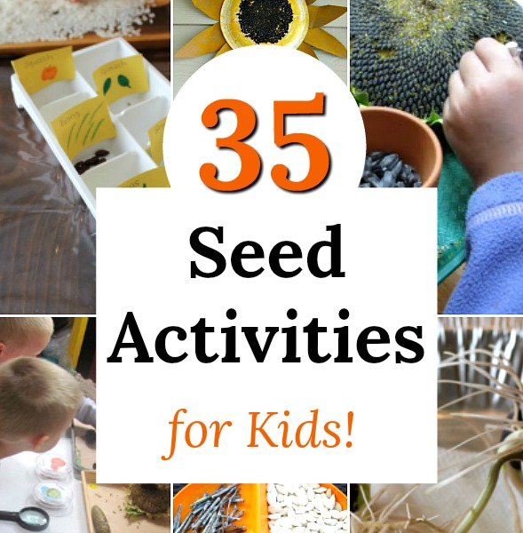Fun seed activities perfect for kids of all ages, especially preschoolers! Awesome nature learning and science. #science #preschool #nature #seeds #homeschool #learning