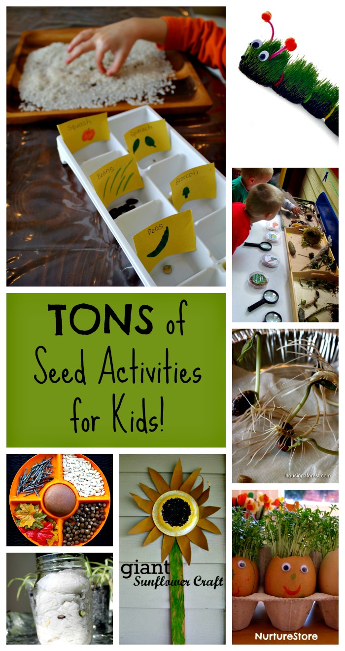 These are awesome seed activities and crafts for preschoolers - perfect for spring themes and units and gardening with kids too! #gardening #seeds #activities #kids #preschool #spring
