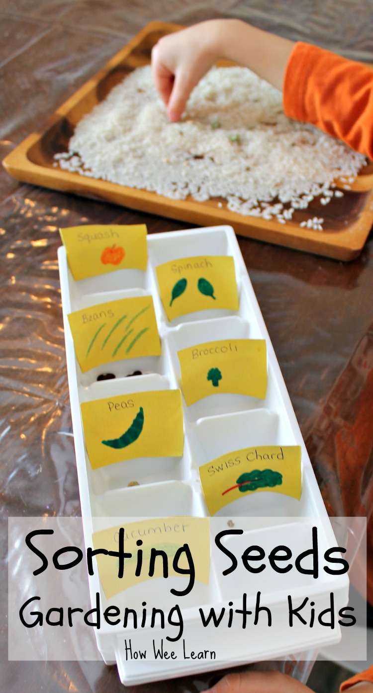 seed activity for kids