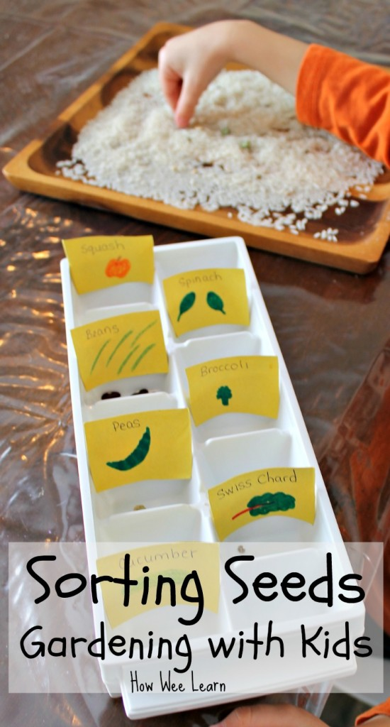 Kids compare and sort different seeds