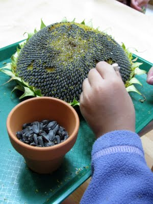 developing fine motor skills with seeds