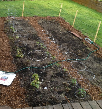 growing a vegetable garden to eat more veggies