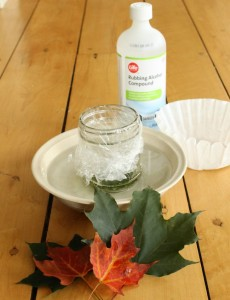 Why do leaves change color in the autumn? A great science experiment for kids!