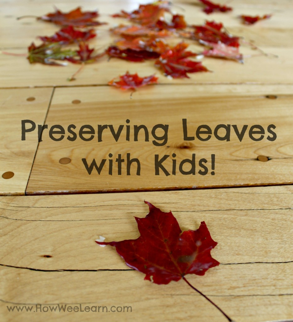 preserving leaves, how we learn