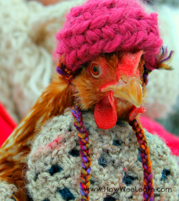 adorable crocheted chicken hats to keep the ladies warm!