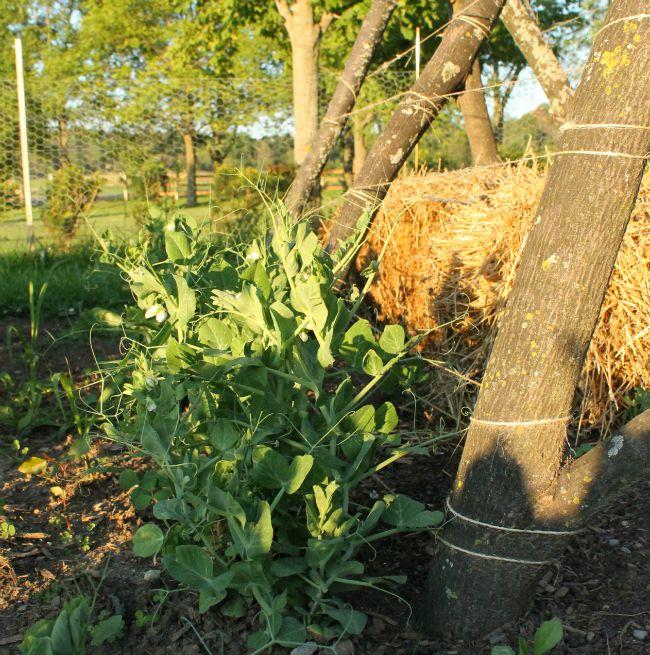 July garden 2