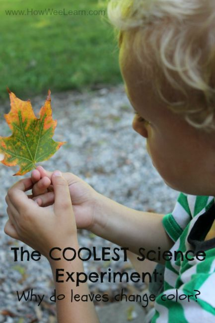 Science experiments for preschoolers - leaves