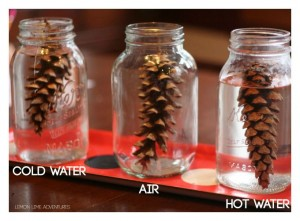 Science experiments for preschoolers - pine cones