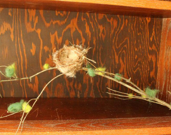 sceince math shelf nest