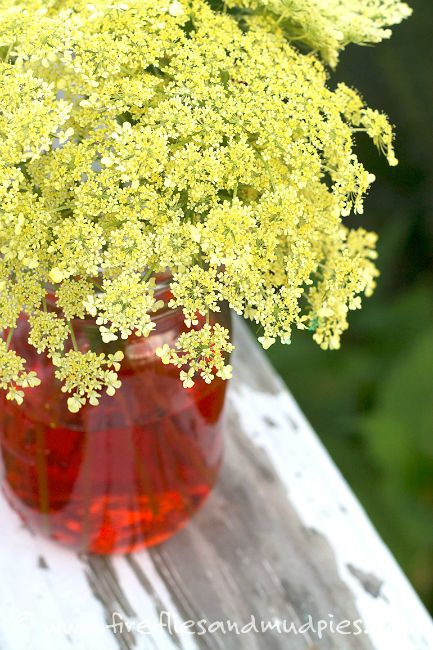 science experiments for preschoolers - coloring wild carrot
