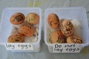 Easter egg hunt ideas - oviparous animals