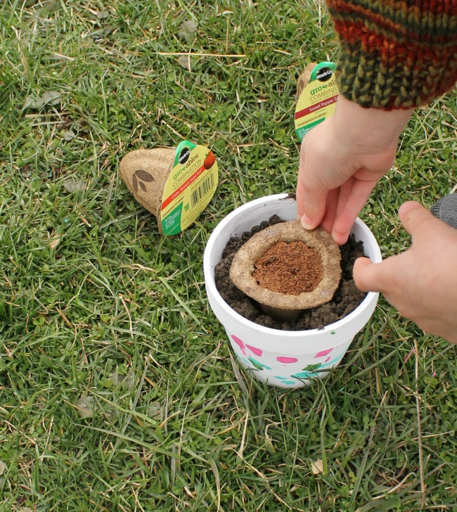 Planting the Gro-ables seed pods