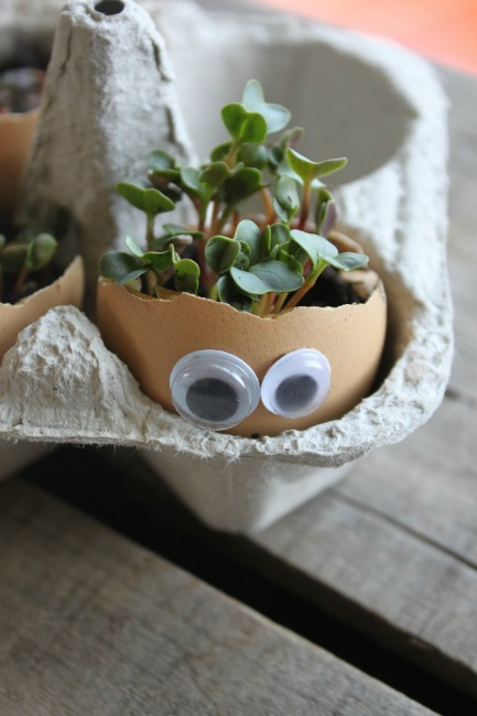 Fun garden ideas - eggshell sprouts