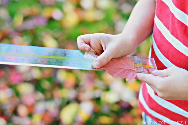 Fall crafts for kids - measuring leaves