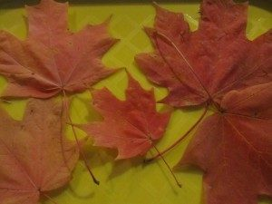 Fall science experiments - crunchy leaf experiment