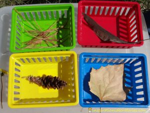 Fall science experiments - fall sorting