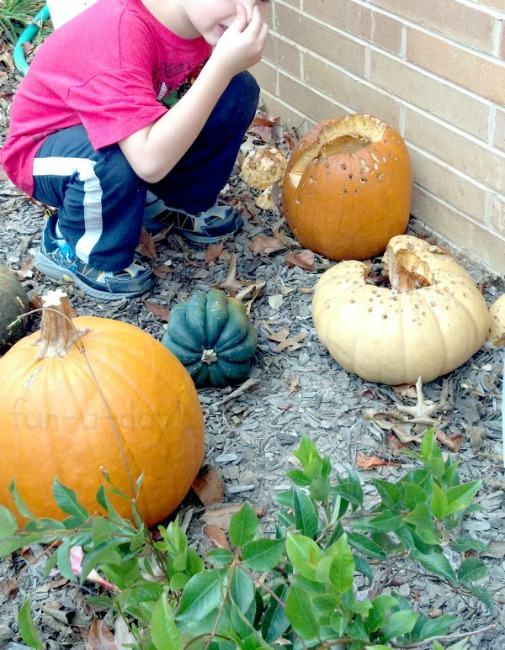 Fall science experiments - pumpkin decomposition