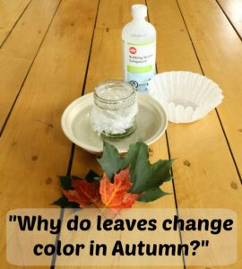 Fall science experiments - why do leaves change color