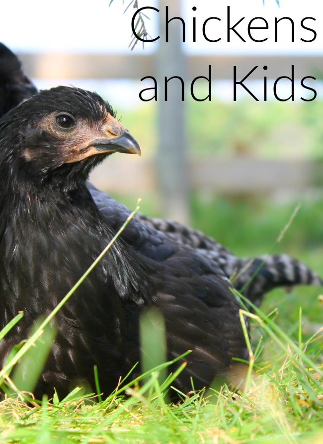Have you ever thought about raising chickens? There are some great benefits, expecially if you have children! A great way to start a homestead!