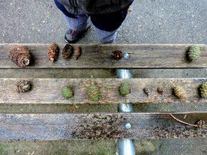 Forest Kindergarten - pine cones