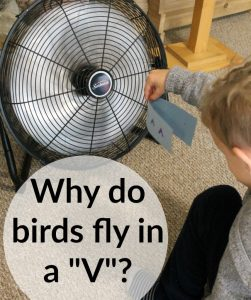 "Why do birds fly in a ""V""?"