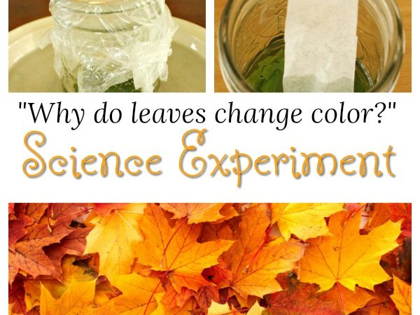 Awesome science experiment for kids this Fall. Why do autumn leaves change color? Such a cool activity! #science #experiment #autumn #kidsactivities #STEM #preschool #kids