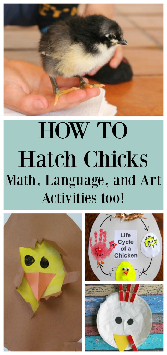 A baby chick and two sample learning activities we suggest when learning to hatch baby chicks.