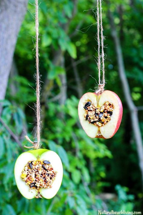 Get your kids outside and in touch with nature with this all-natural apple bird feeder! Here you will find cute and simple apple crafts for kids, toddlers and preschoolers. #applecraft #fallcrafts #fallcraftsforkids #autumncrafts #preschoolcrafts #howweelearn