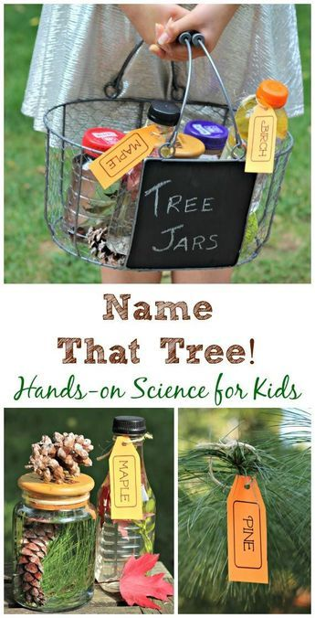 Kids of all ages will learn how to easily identify the traits for trees in their area with this fun and easy scavenger hunt! Not only are these activities thrilling, they keep kids active and encourage collaboration and problem solving.  Check out our massive list of ideas here! #howweelearn #scavengerhunt #kidsactivities #preschoolactivities