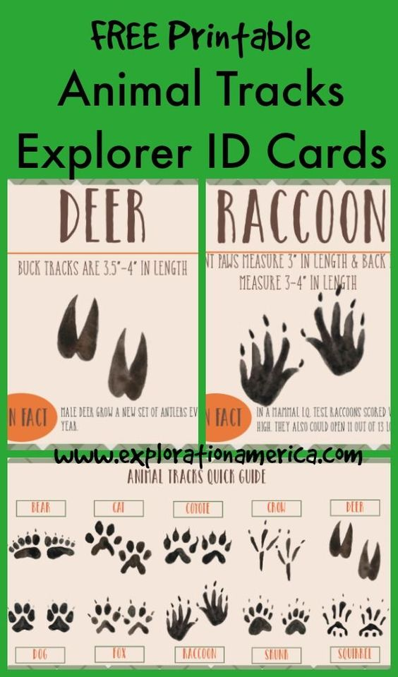 Use this printable to explore animal tracks with your toddler, preschooler or young kid. A great idea for an outdoor scavenger hunt. Not only are these activities thrilling, they keep kids active and encourage collaboration and problem solving.  Check out our massive list of ideas here! #howweelearn #scavengerhunt #kidsactivities #preschoolactivities