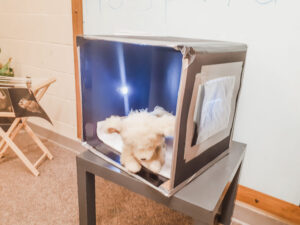 vet dramatic play idea for the preschool classroom