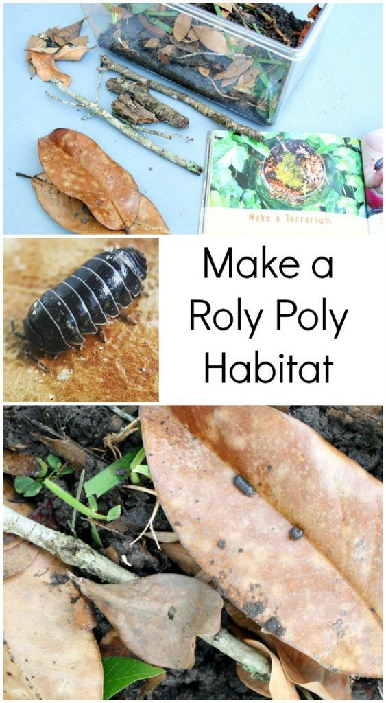 container with items need to make a habitat for pill bugs